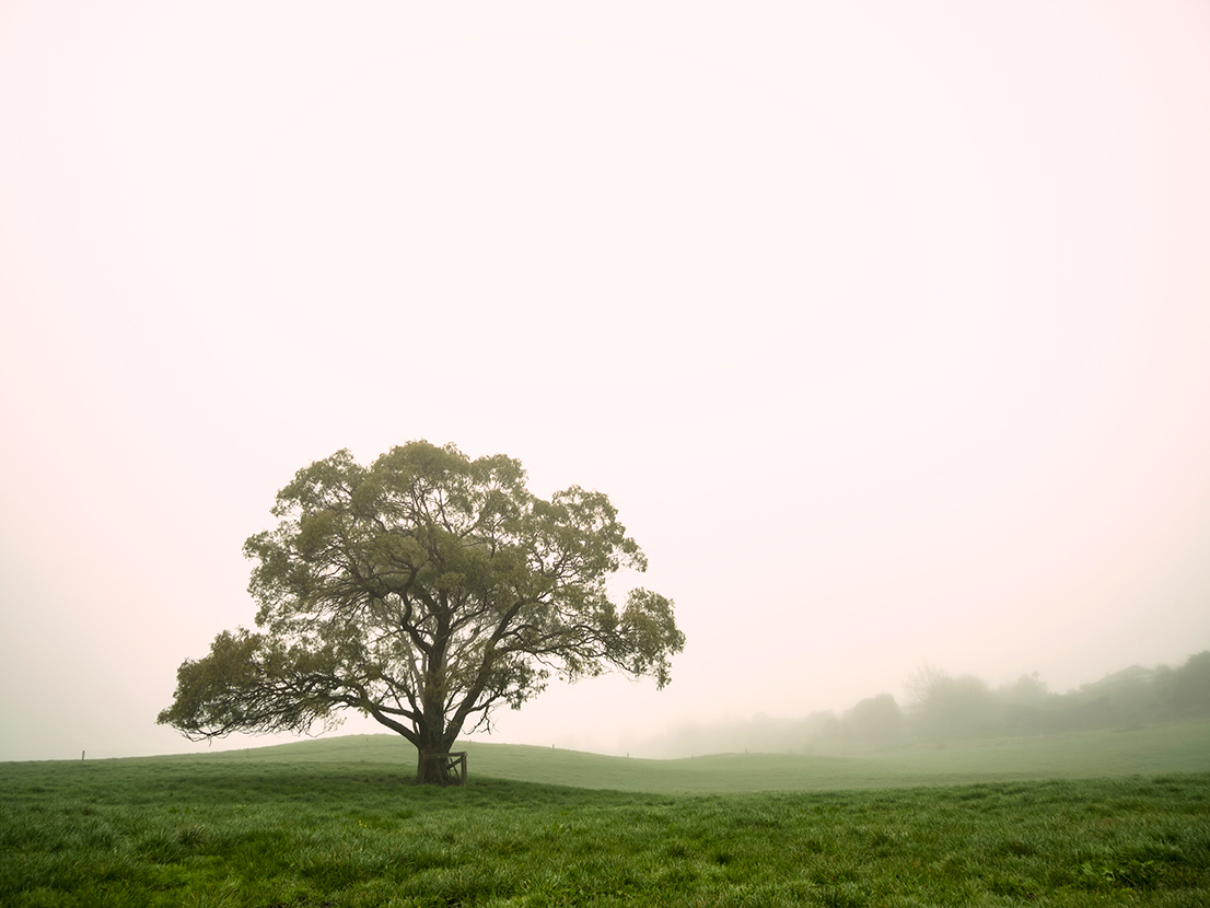 tree field fog