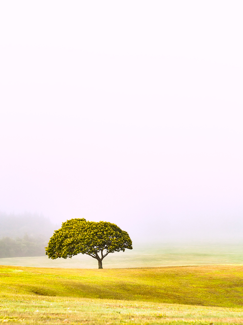 solo lonely tree fog