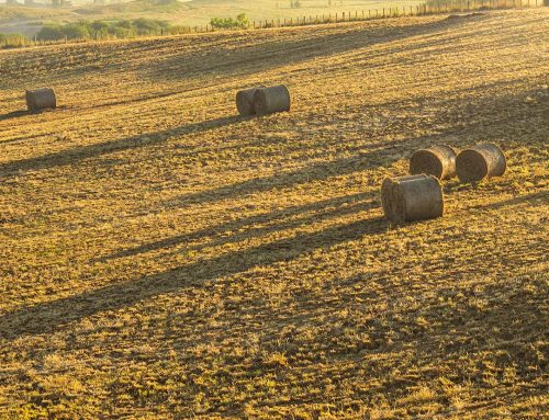 Golden hour hay bale shadow hunting